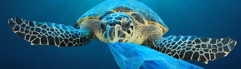 saving the ocean, use biorift